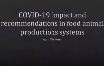 COVID-19 Impact and Recommendations in Food Animal Production Systems