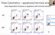 VCS 2020: Proteasome inhibition via bortezomib induces apoptosis in canine glioma cells