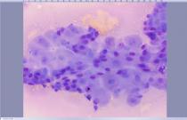 Diagnostic Veterinary Cytology